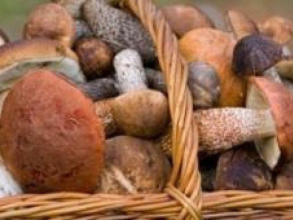 В поход за грибами - что брать с собой?