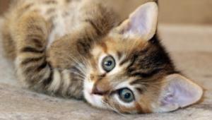 В Одессе пройдет акция помощи бездомным животным