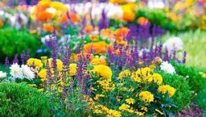 Нові квітники порадують жителів Кропивницького та гостей міста