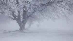 До Кропивницького знову повертається зима – 20 березня очікується снігопад