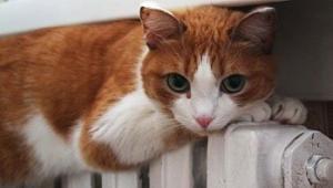 Чи покращиться теплопостачання у Кропивницькому завдяки встановленню нових блочно-модульних котелень?